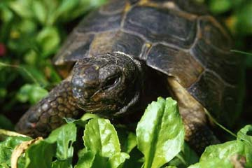 Tortoise Trust Web - Adoption