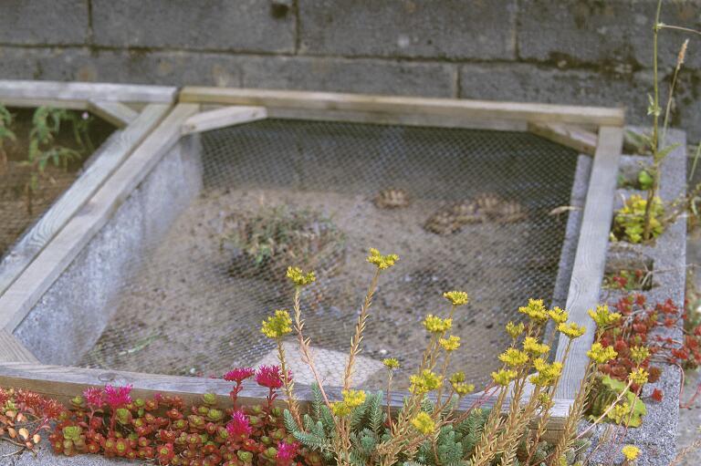 Pet Tortoise House Outdoor habitats