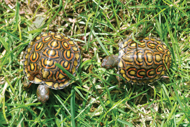 Meal Worms in addition Rhinoclemmys also What Do Turtles Eat together with  moreover Animals. on can box turtles eat mealworms