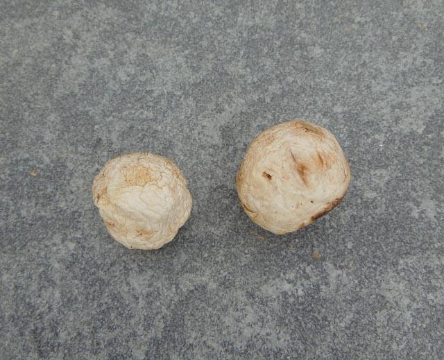 Mushrooms after test