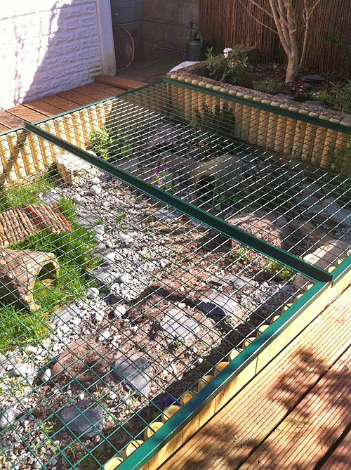 Anti-predator mesh over tortoise habitat