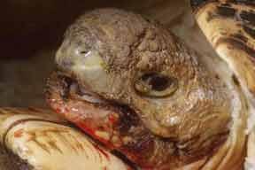 Tortoise Trust Web Emergency Symptoms