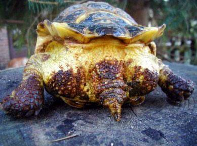 Food List For Russian Tortoise