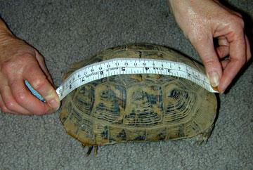 Incorrect               Measurement