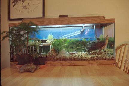 how to make a simple aquarium
