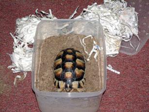 Tortoise Trust Web Refrigerator Hibernation Data