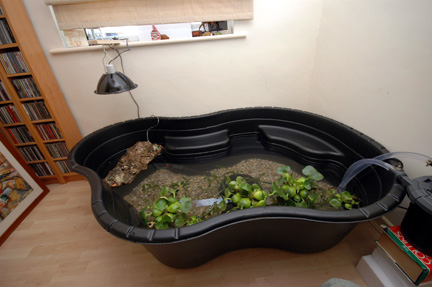 Surface mount ponds for slider and other aquatic turtles Diy indoor turtle pond