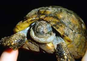 Tortoise Trust Web - Emergency Symptoms!