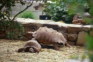 Tortoise Trust Web - UNDERSTANDING REPTILE LIGHTING SYSTEMS