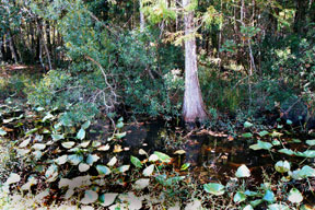Tortoise Trust Web Natural Habitats For Aquatic Turtles
