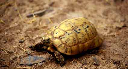 Tortoise Trust Web - Understanding Vivarium Substrates